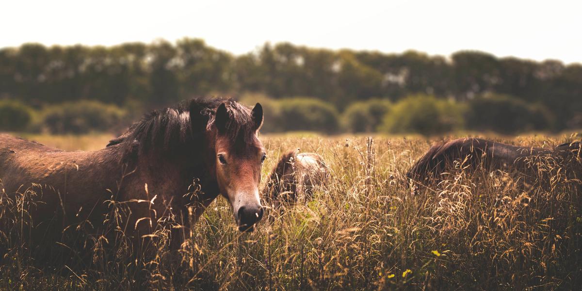 Peaky Blinders Horse